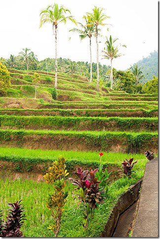 Bali-Tour---Wanderlust-Storytellers-10