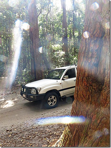 Forest-Drive-Fraser-Island