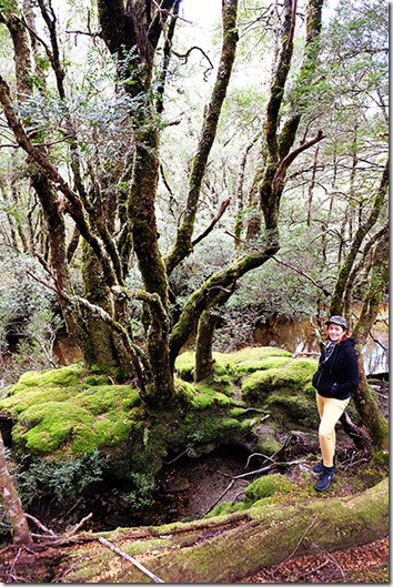 Cradle Mountain Hike - Things do to in Cradle Mountain
