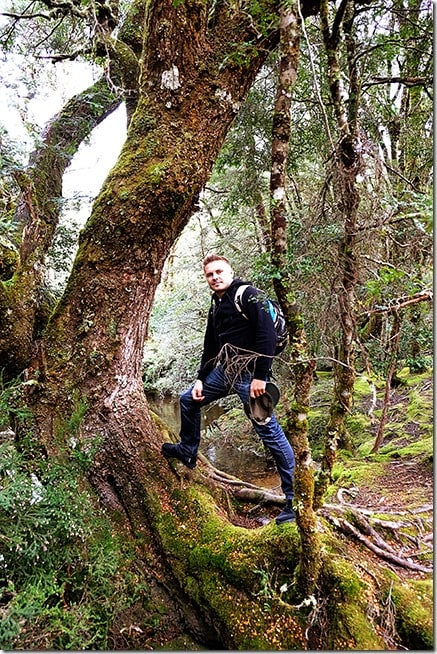 Enchanted Walk - Cradle Mountain Short Walks