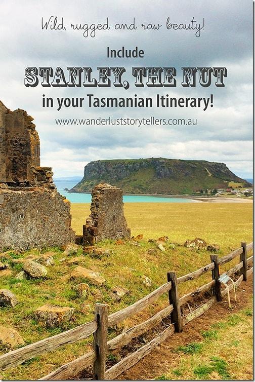 Stanley the Nut Tasmania