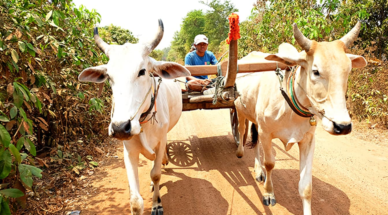 Responsible Travel A Siem Reap Day Tour About Local