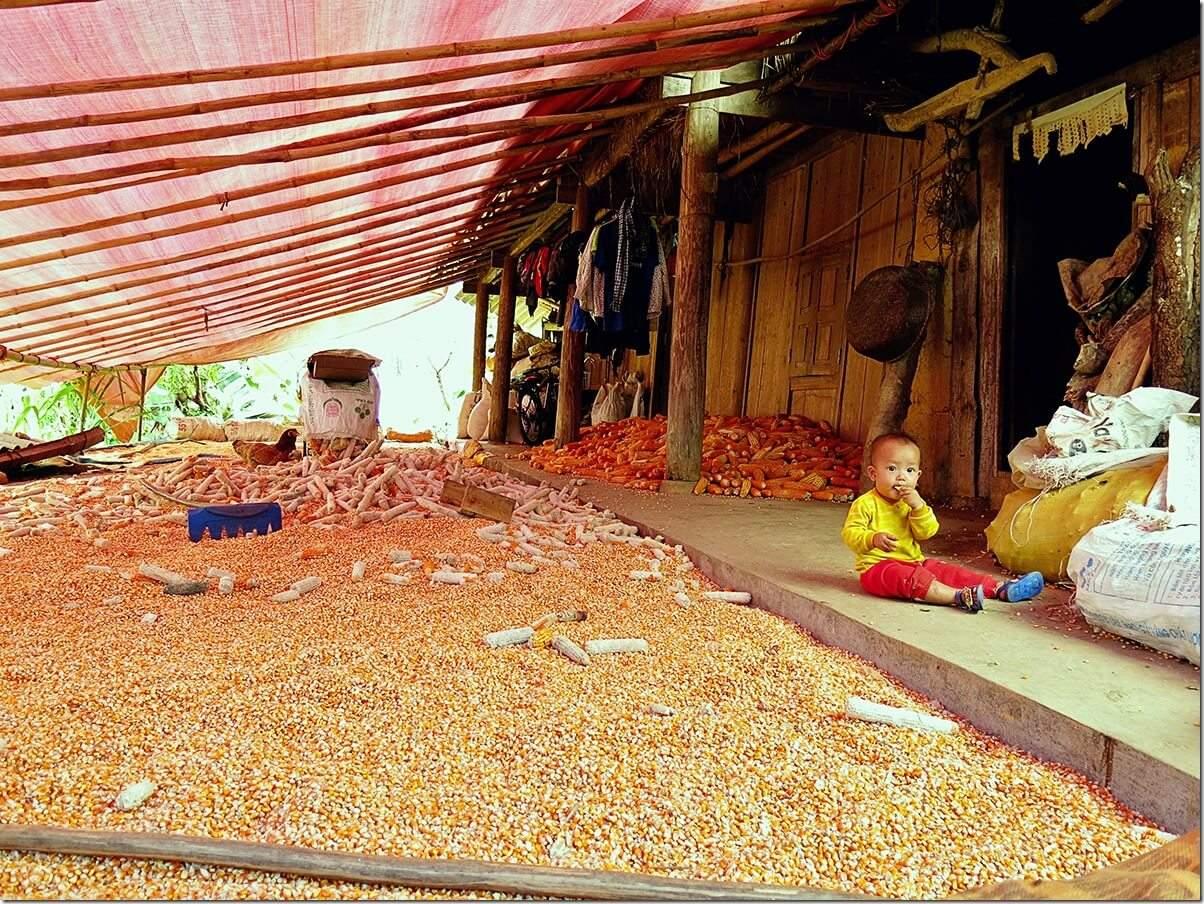Hmong corn village - Ban Pho