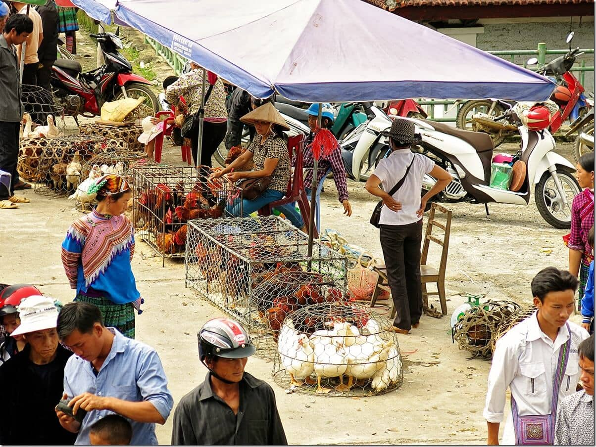 Poultry for sale at Bac Ha market, Vietnam