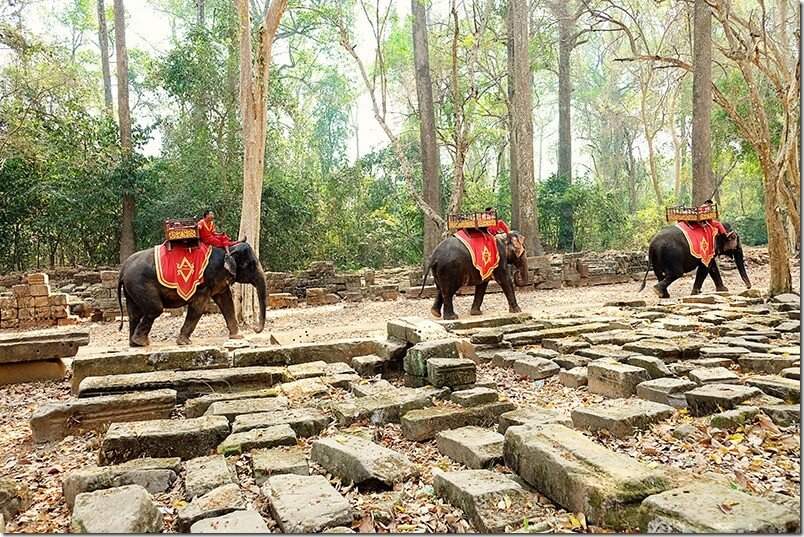 Elephants-at-Angkor-Wat