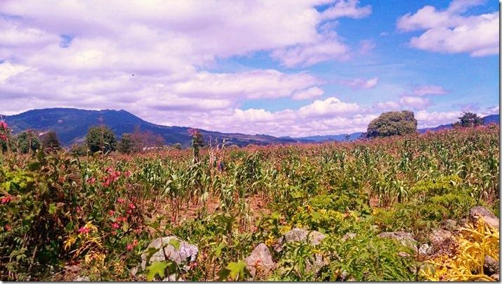 homestay in guatemala