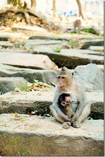 Monkeys at Angkor Thom temple