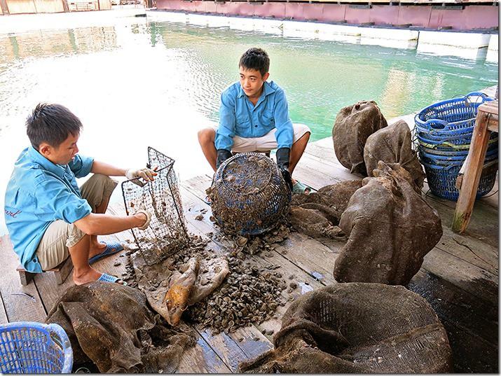 Vietnam Pearl Farm at Halong Bay
