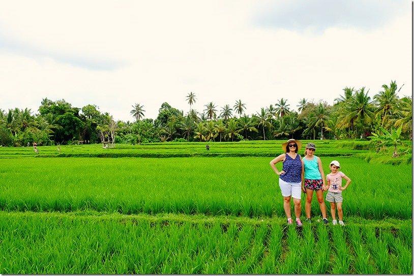 Ubud Rice Field Walk
