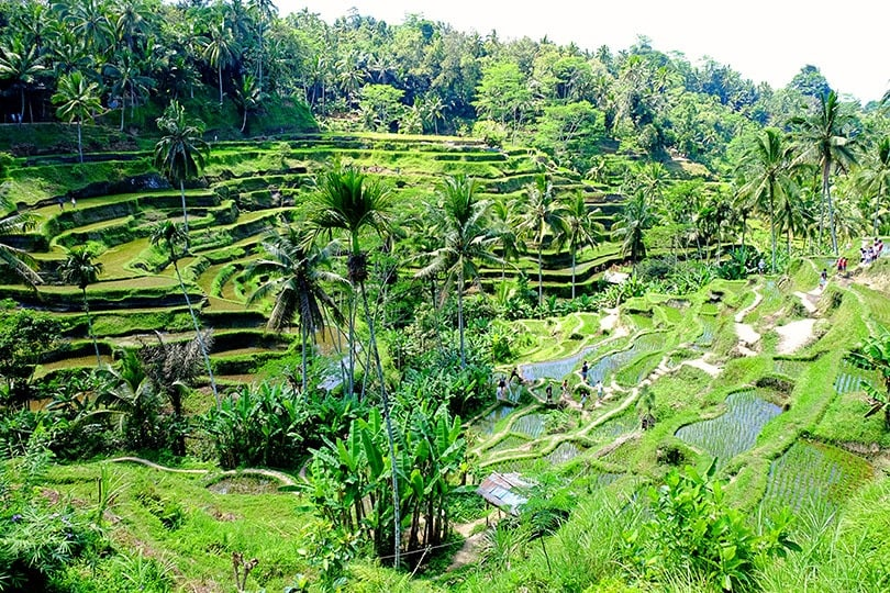 top 10 incredible things to do in ubud with kids