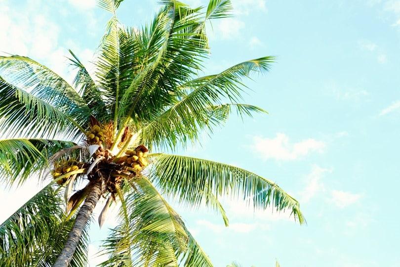 Gili island accommodation the unique oceano jambuluwuk for Palm tree villas 1