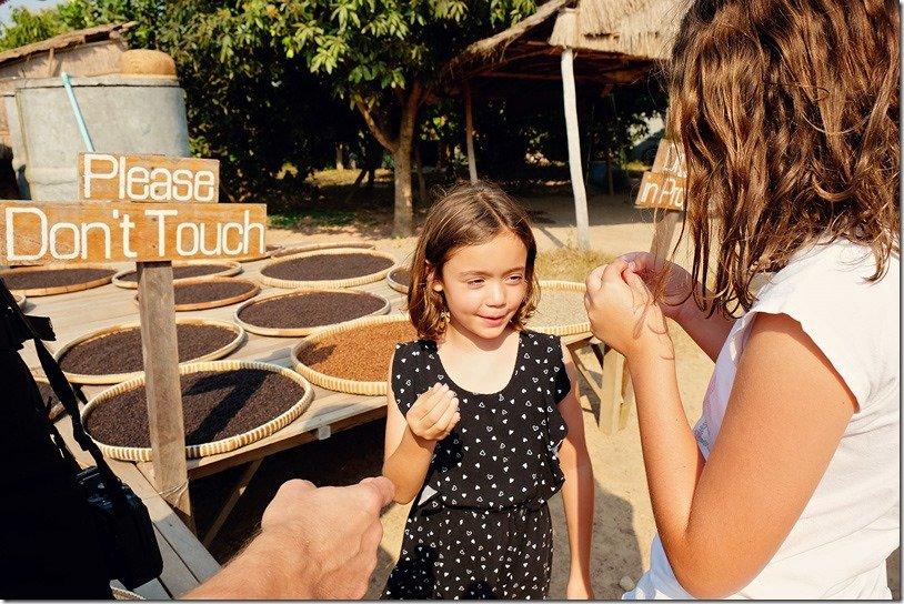 Kampot Pepper Plantation Tour