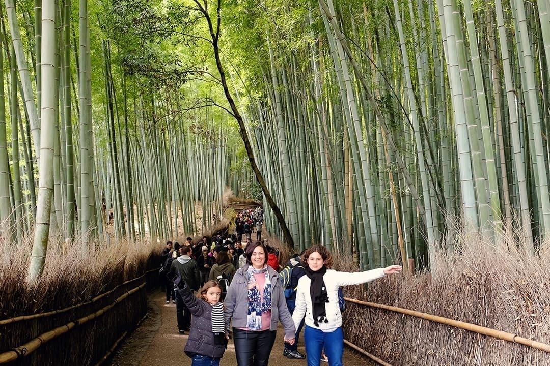 Bamboo Forest Arashiyama Kyoto Japan