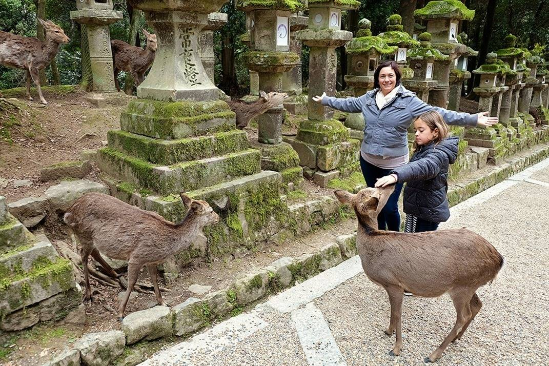 Deer at Nara Park - Osake day Trip - Japan
