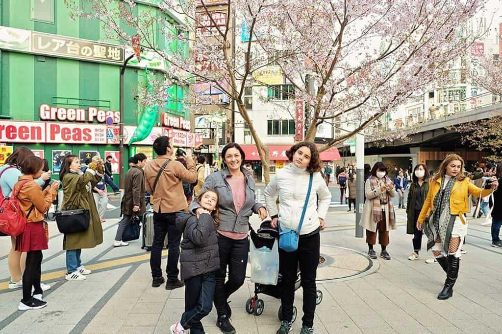 Shinjuku Tokyo Japan Cherry Blossoms