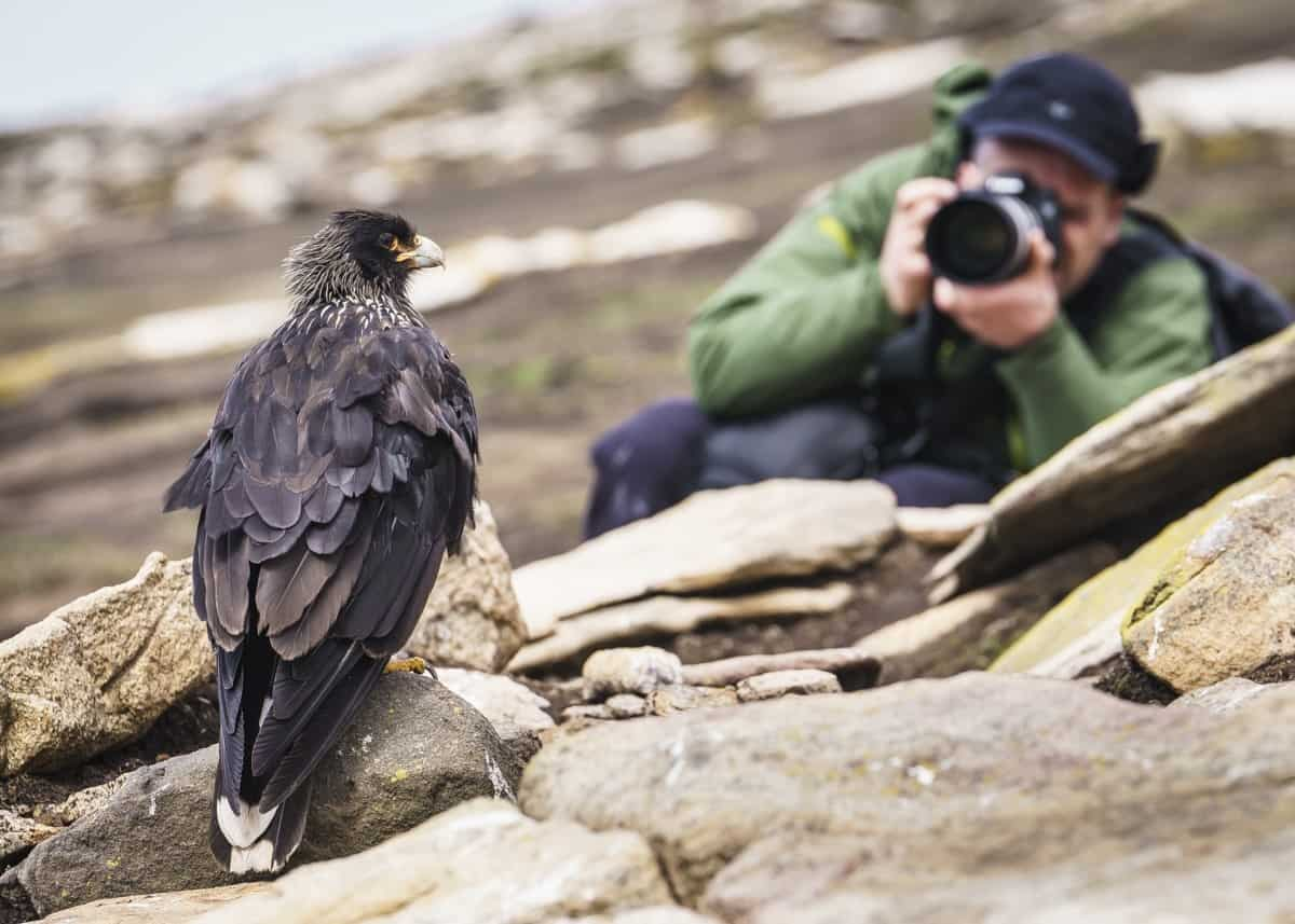 Falklands, Saunders Island