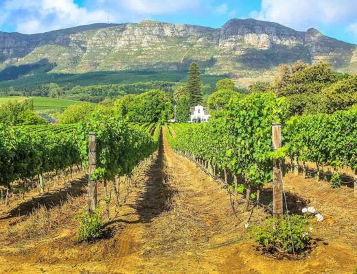 Child Friendly Wine farms to Visit in the Cape Winelands