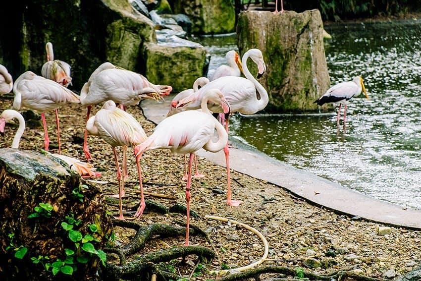 Kuala Lumpur Bird Park for Kids