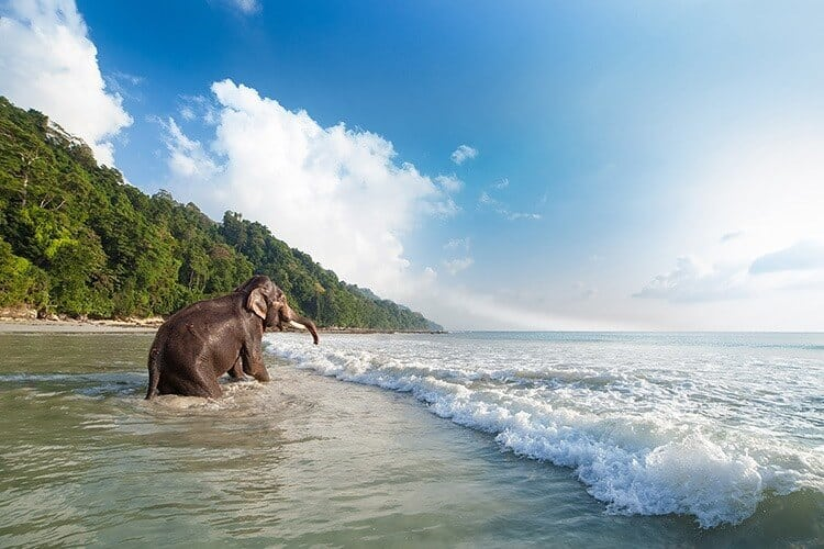 Bathing elephant on the tropical beach background.