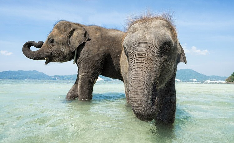 Two baby elephants playing and washing into the sea.