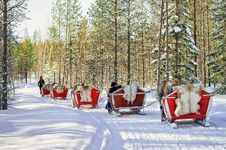 Reindeer caravan safari with people forest Lapland Northern Finland