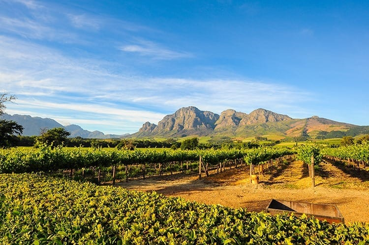 Stellenbosch Vineyards