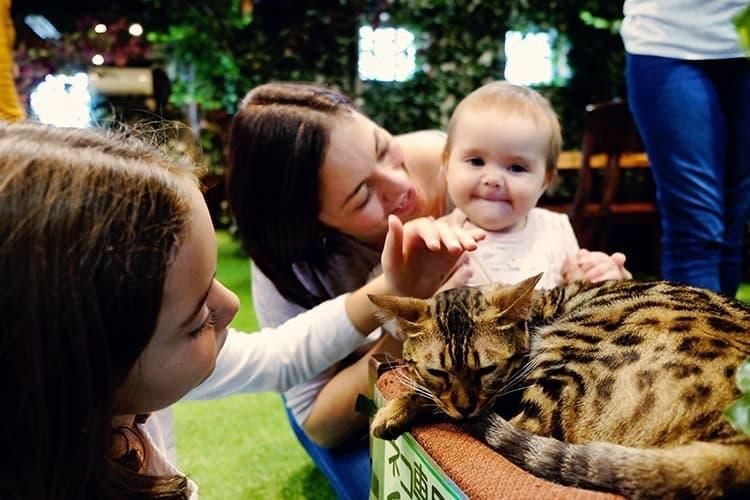 Cat Cafe in Kurashiki