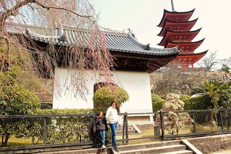 Cherry Blossoms Miyajima Island