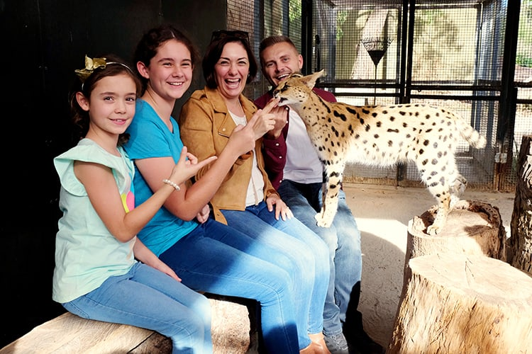 Werribee Open Range Zoo Car Encounter / What to do in Melbourne with Kids