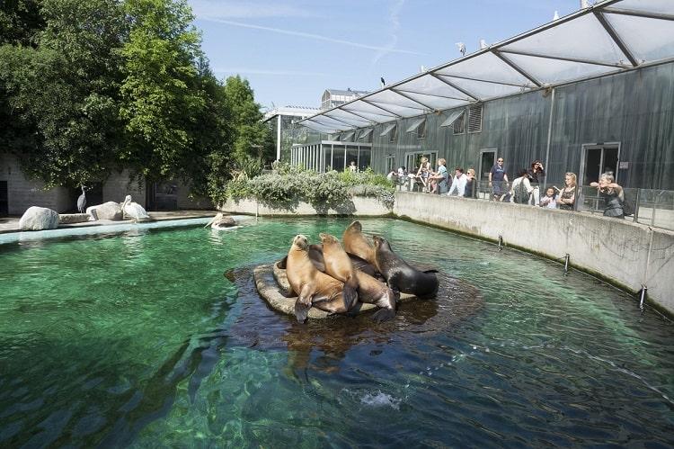 Artis Royal Zoo Amsterdam - seals