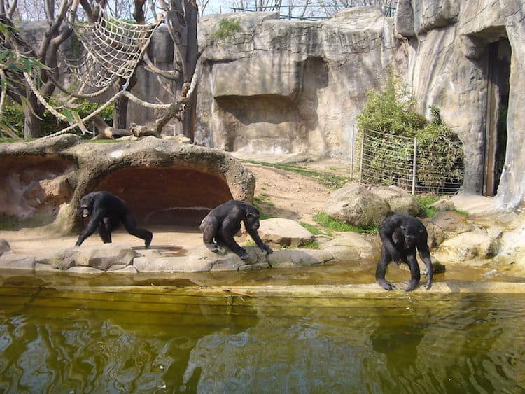 Barcelona Zoo with Kids - Barcelona with Kids