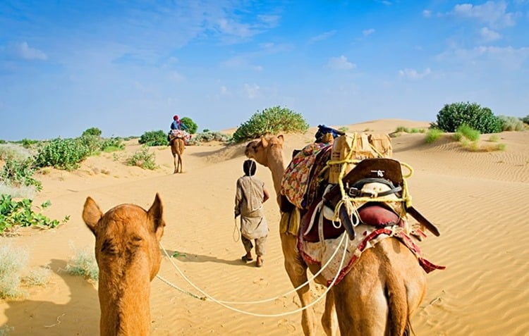 Camel caravan going through the sand dunes in desert, Rajasthan, India
