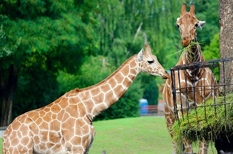Things to do in Wroclaw with kids - visit Wroclaw Zoo