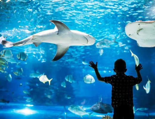 Las Vegas Aquarium with kids