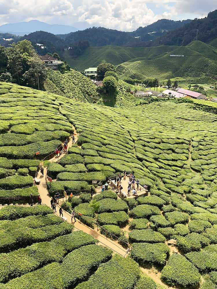 Best day trips from Kuala Lumpur to Cameron Highlands