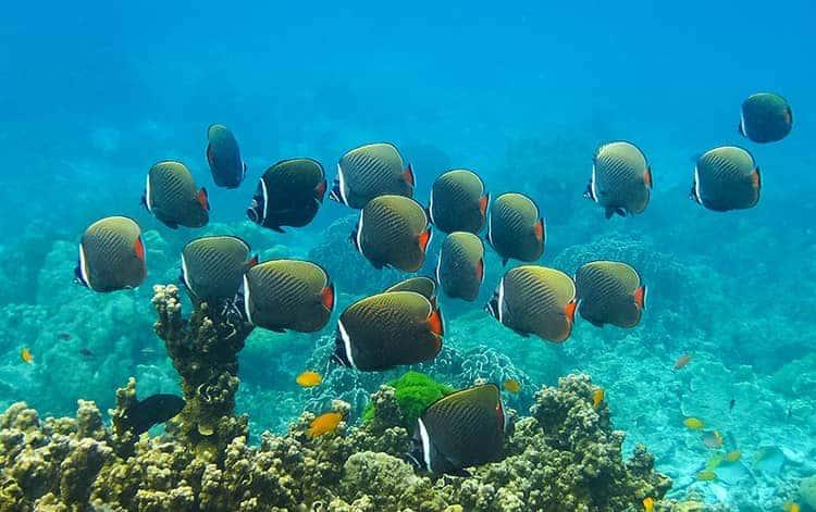 Koh Lipe scuba diving