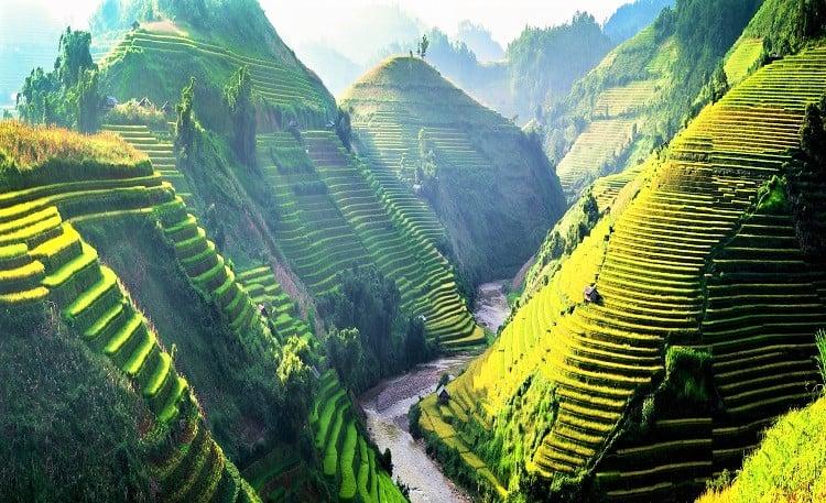 Best time to visit Vietnam - North-West Vietnam Rice Fields