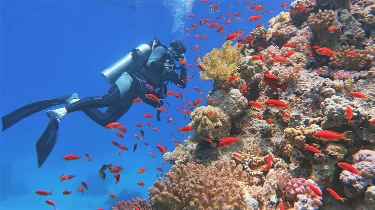 Scuba Diving in Great Barrier Reef