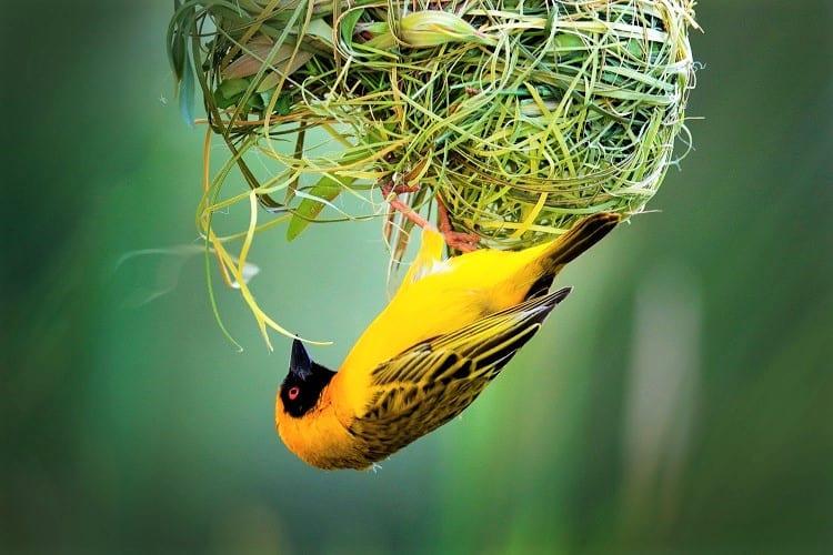 Uganda Tours - Uganda Birds