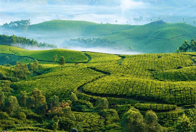 5 Essential things you need to know before you go to Kerala - Things to see