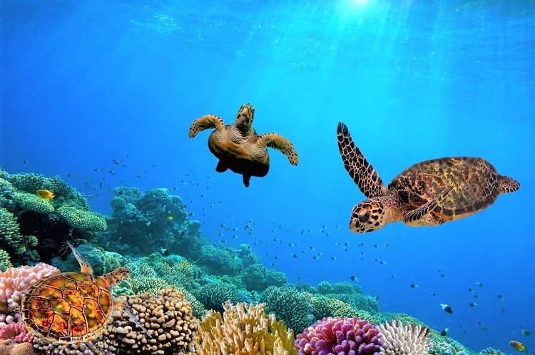 Best things to do in Riviera Maya - Snorkelling in the Great Maya Reef