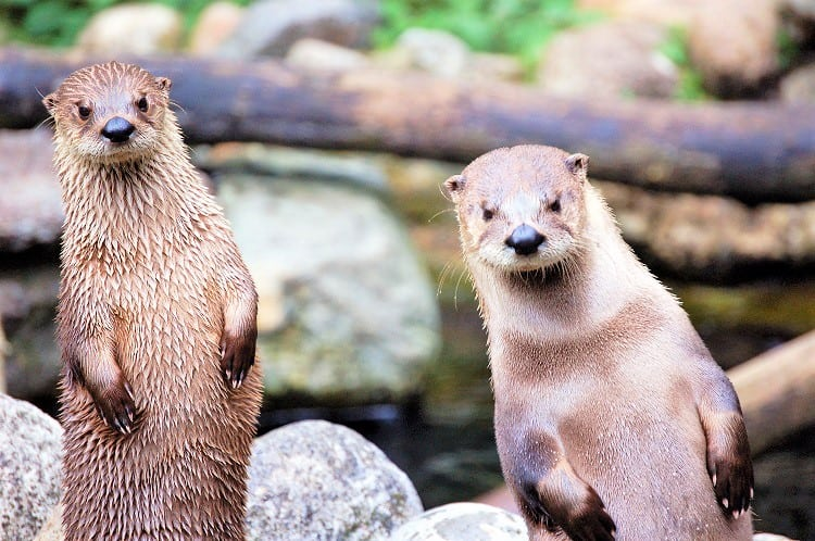 Nature Activities with Family in the UK - Check out the Mull Island Otters