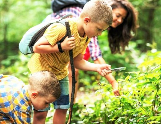 Nature Activities with Family in the UK - Go on a Big Forest Search in UK with kids