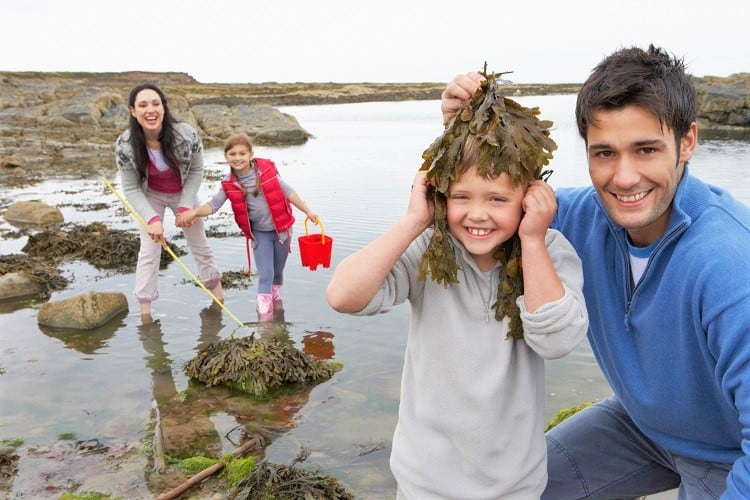 Nature Activities with Family in the UK - Go on a Sea Weed Search in UK with kids