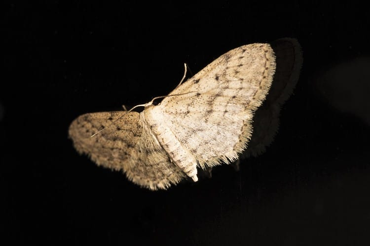 Nature Activities with Family in the UK - Moth Night in UK