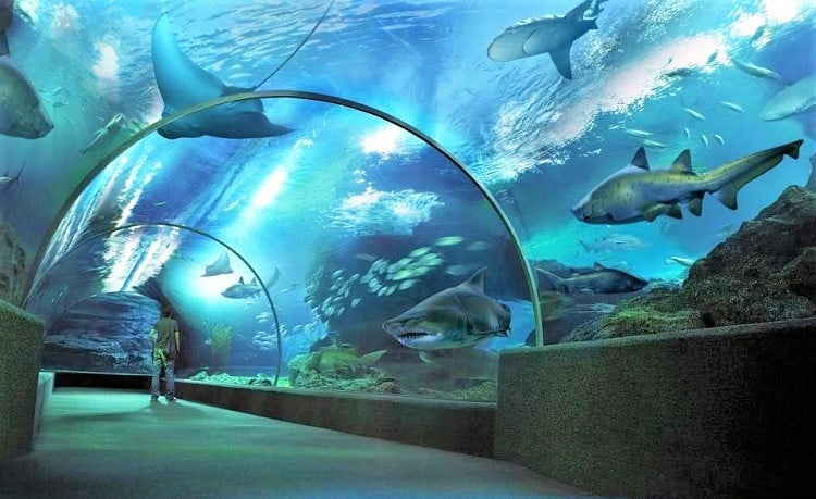 Family friendly things to do in Bangkok - check out SEA LIFE Bangkok