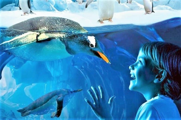 SEA LIFE Bangkok - Things to do in Bangkok with Kids