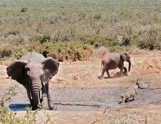Addo-Elephant-National-Park-Self-Drive-Tour