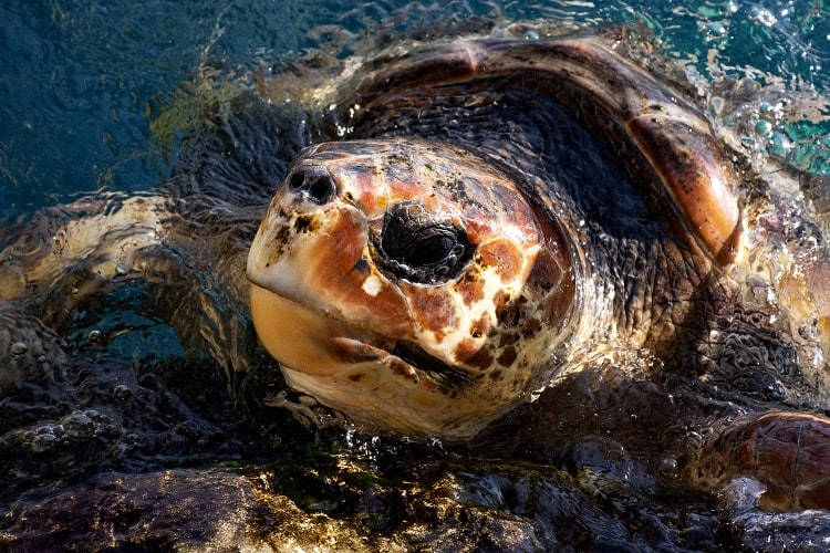 Check out Leatherback Turtles on a Central America Widlife Tour