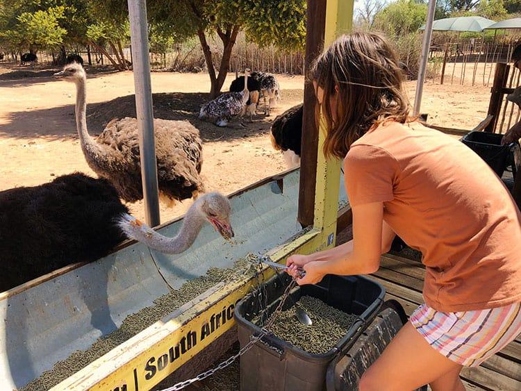 Oudtshoorn Safari Ostrich Farm